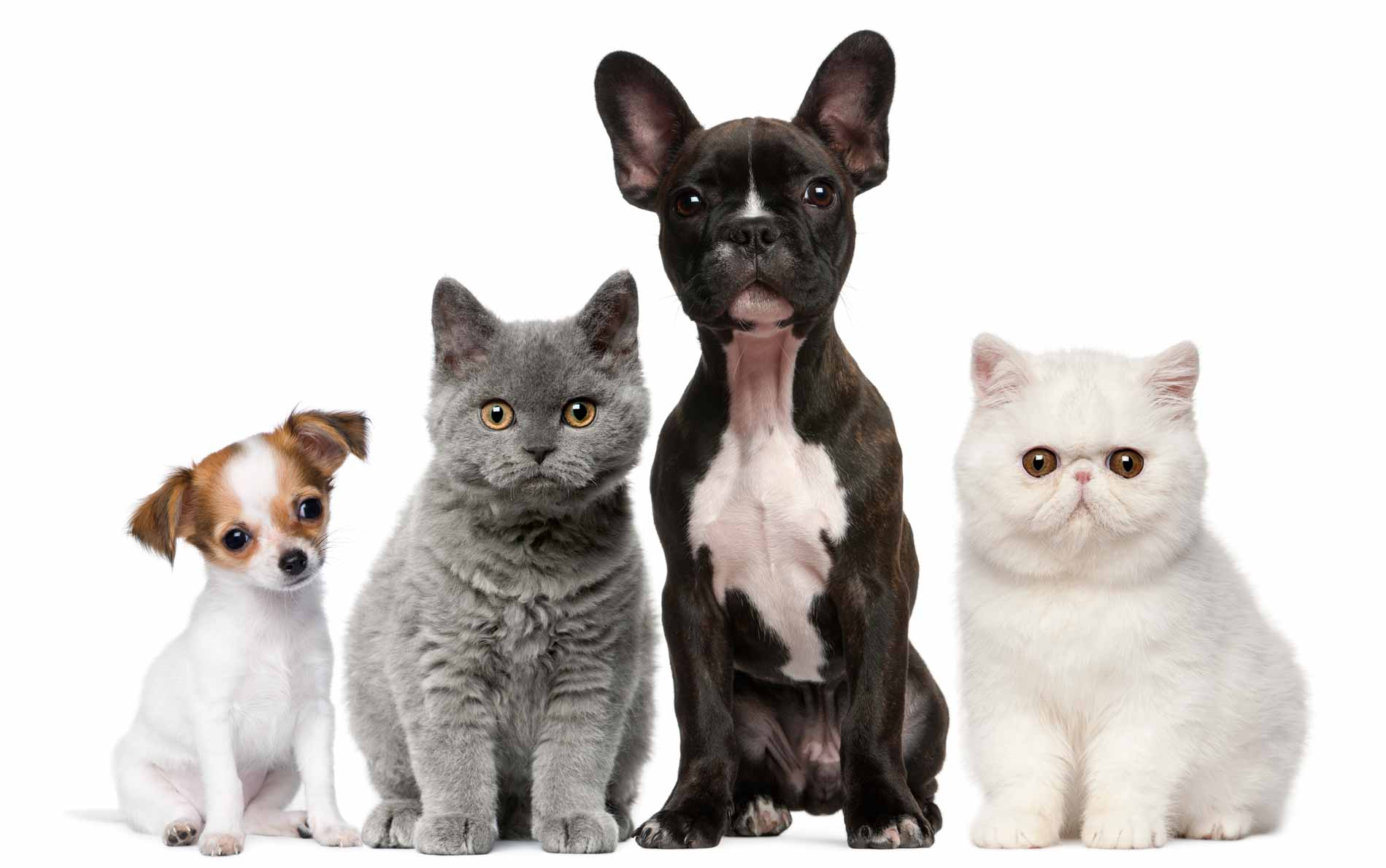 Group-of-dogs-and-cats